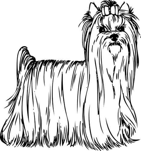 Yorkshire Terrier Silhouette, Aufkleber Digitaldruck