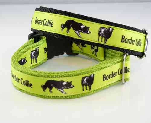 Border Collie Motiv gruen Halsband 25mm breit